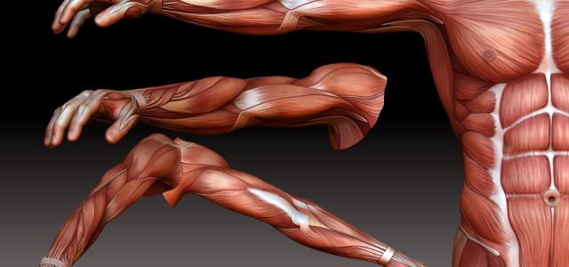 Darmowe modele anatomiczne