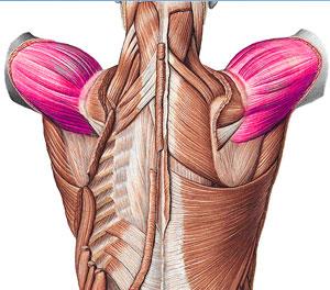 http://www.memrise.com/mem/1420746/m-deltoideus-pars-acromialis/