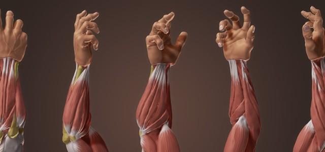 8# Mięśnie przedramienia