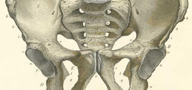 10# Kości obręczy kończyny dolnej