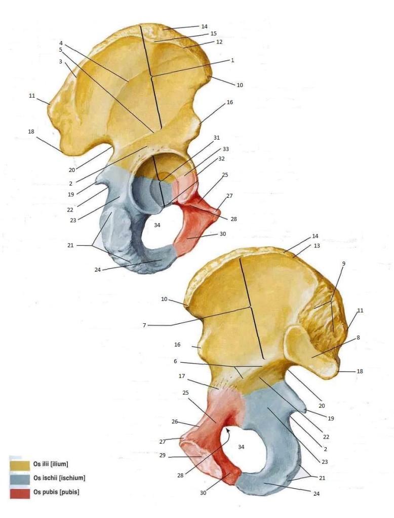 anatomiaaa2