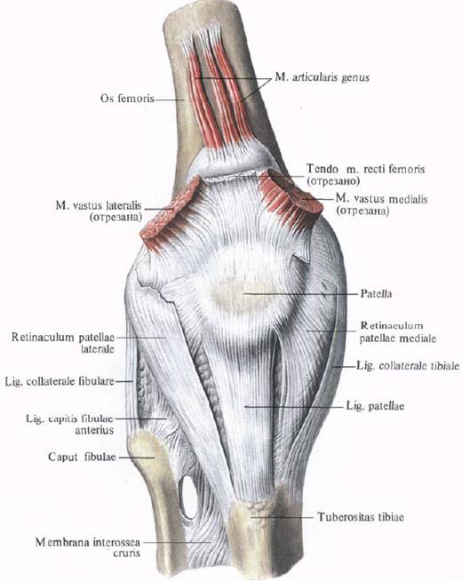 http://en.shram.kiev.ua/health/anatomy/page_737.shtml