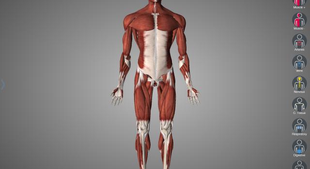 W świecie cyfrowej anatomii – Essential Anatomy 5, recenzja