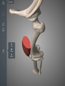 Przekrój mięśnia prostego uda (opcja slice)