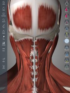 """Widok na mięśnie podpotyliczne (opcja """"Hide"""" na mięśniu czworobocznym)"""