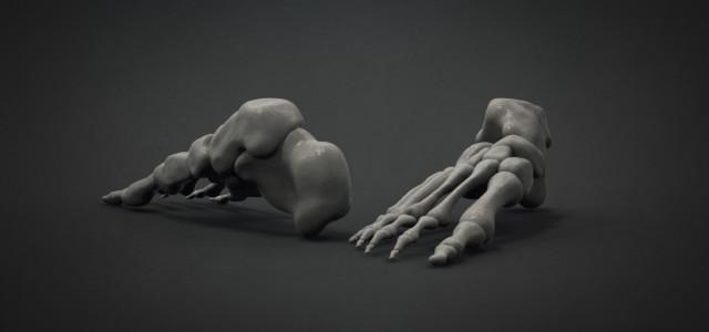 19# Stawy stępu i palców stopy