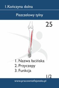 25 Piszczelowy tylny 1