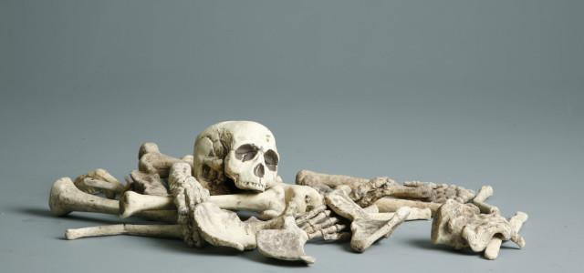 Mój ulubiony zestaw do nauki anatomii to…