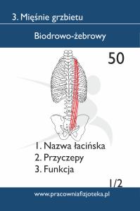 50 Biodrowo-żebrowy 1
