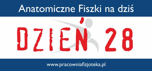 Anatomiczne fiszki na dziś – dzień 28 OSTATNI cz.2