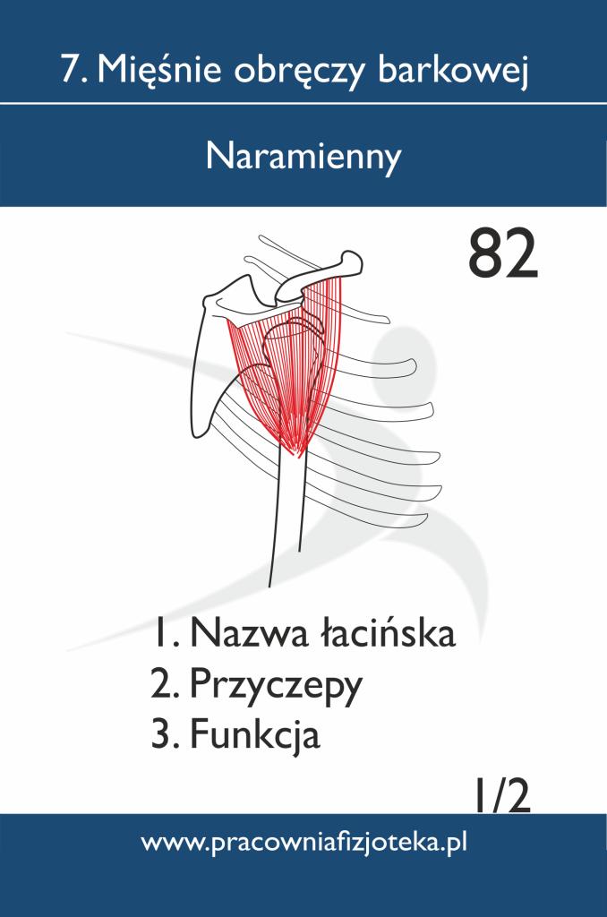 82 Naramienny 1