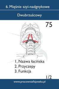 75 dwubrzuścowy 1