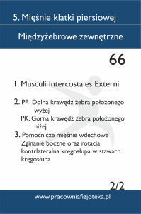 66 Międzyżebrowe zewnętrzne 2