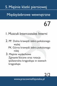 67 Międzyżebrowe wewnętrzne 2