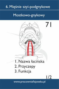 71 Mostkowo-gnykowy 1