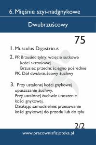 75 dwubrzuścowy 2