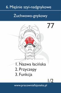 77 żuchwowo gnykowy 1