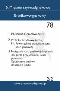 78 bródkowo gnykowy 2