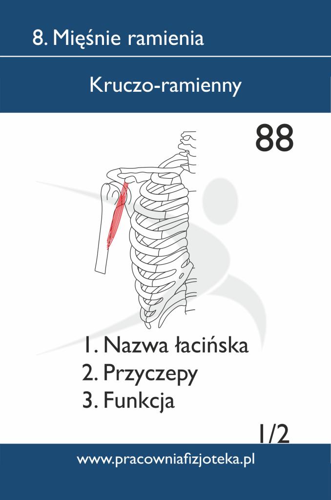 88 Kruczo-ramienny 1