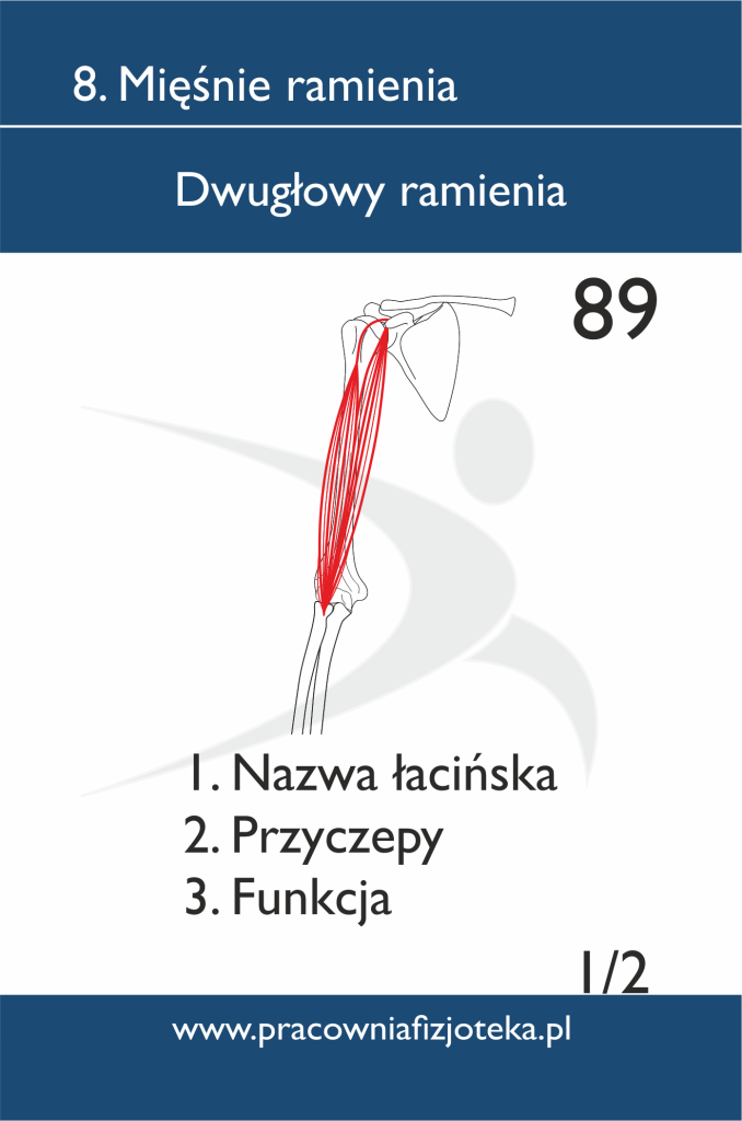 89 Dwugłowy ramienia 1