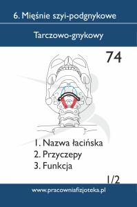 74 tarczowo gnykowy 1