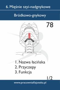 78 bródkowo gnykowy 1