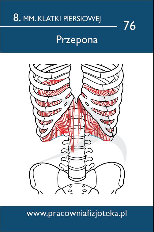 Anatomiczne Fiszki 2017